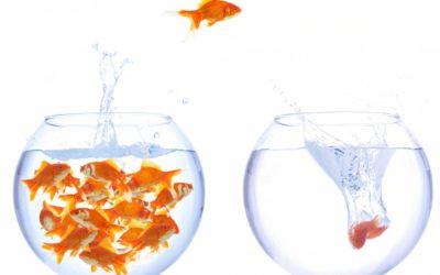 ¿Son molestos los socios minoritarios?